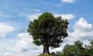 पेड़ की छाया