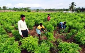 छत्तीसगढ़ में जुटेंगे देशभर के 200 कृषि वैज्ञानिक