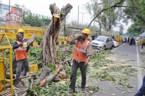 दिल्ली में पेड़ काटने को लेकर हाइकोर्ट में आज सुनवाई